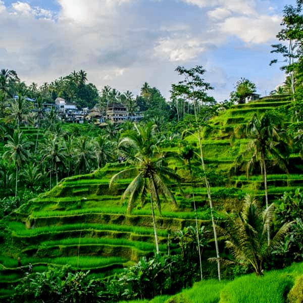 Visit lush green terraces on this Bali Yoga Retreat with the Travel Yogi.